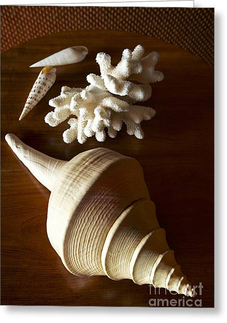 Shells And Coral Greeting Card by Kyle Rothenborg - Printscapes