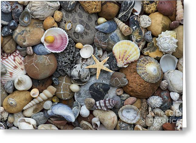 Shells And Pebbles Greeting Card by Tim Gainey