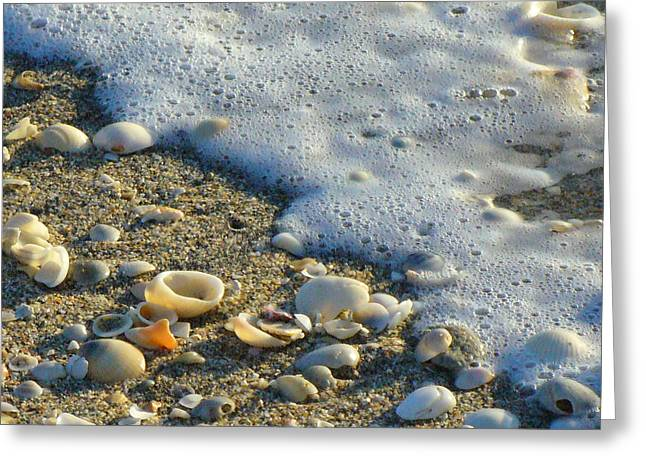 Shells And Seafoam Greeting Card