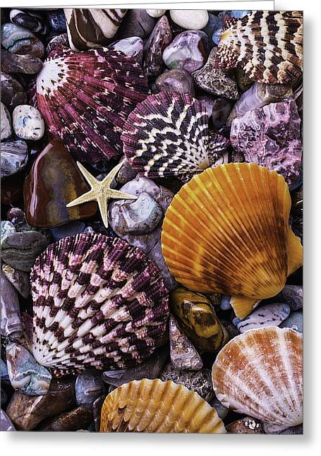 Shells And Stones Greeting Card by Garry Gay