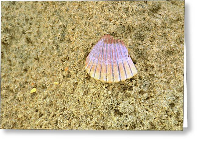 Shells And Stones Greeting Card by JAMART Photography