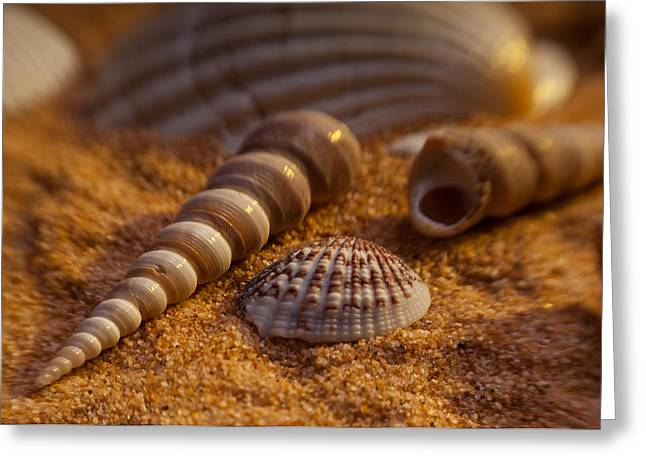 Shells Greeting Card by Anthony Towers