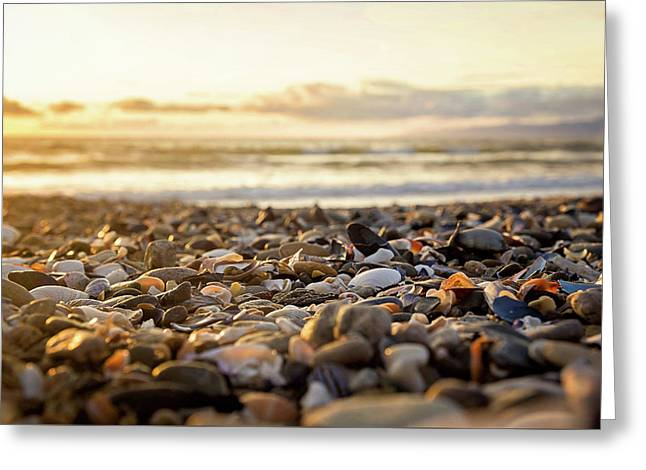 Shells At Sunset Greeting Card by April Reppucci