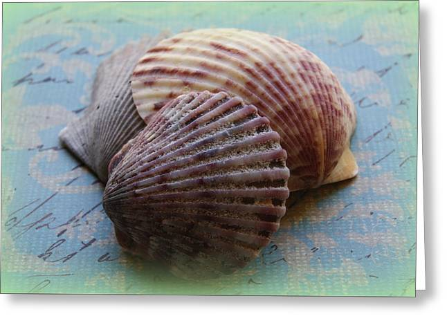 Shells Greeting Card by Diane Reed