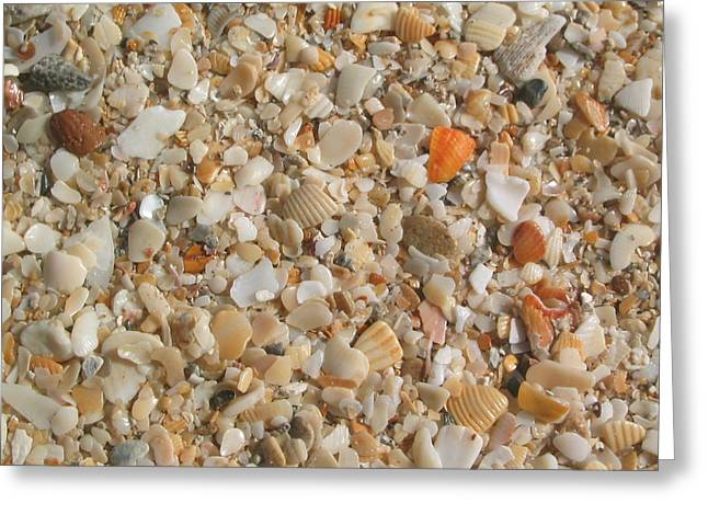 Shells  Greeting Card by Eliot LeBow