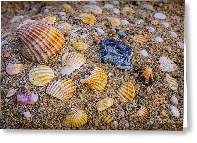 Shells Fragments Greeting Card by Carlos Caetano