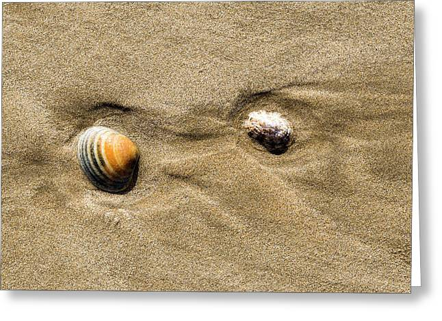 Shells On Beach Greeting Card by Steven Ralser