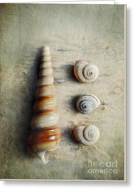 Shells On Beach Wood Greeting Card by Lyn Randle
