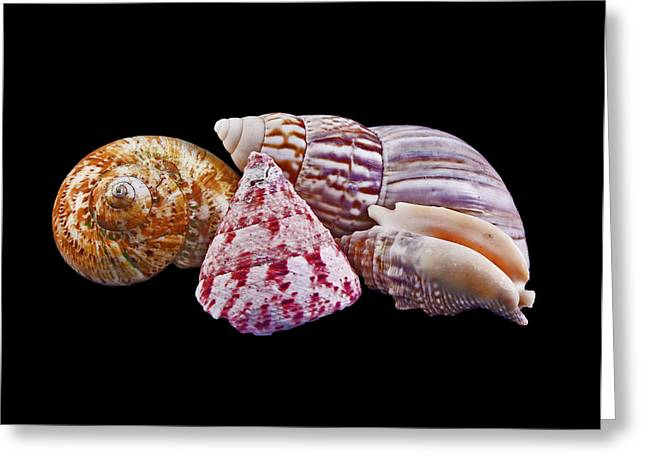 Greeting Card featuring the photograph Shells On Black by Bill Barber