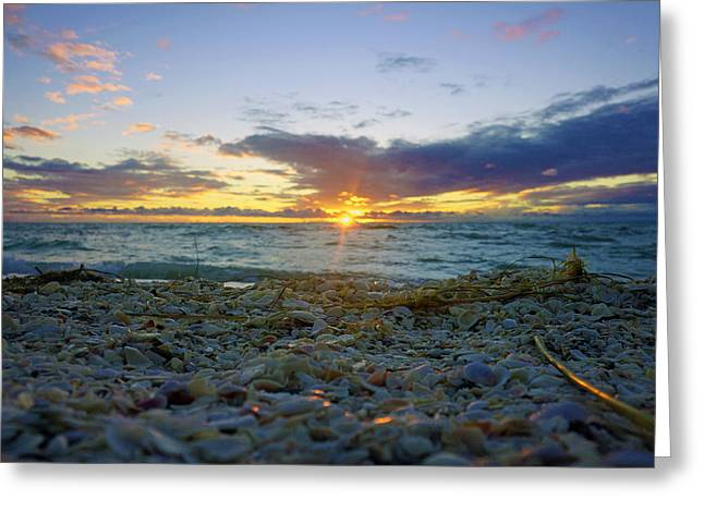 Shells On The Beach At Sunset Greeting Card
