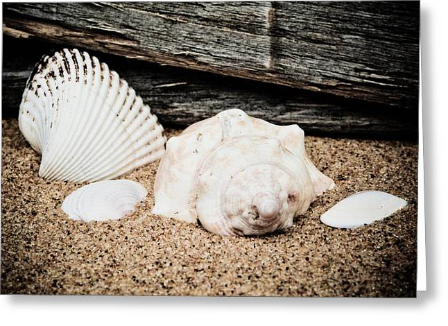 Shells On The Beach Greeting Card by David Hahn
