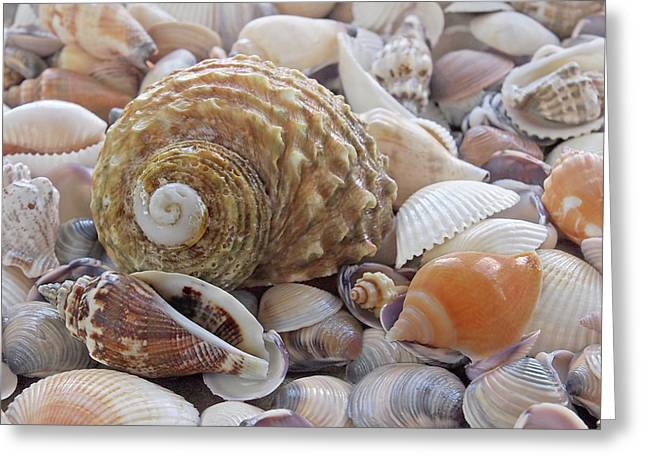 Shells On The Beach Greeting Card by Gill Billington