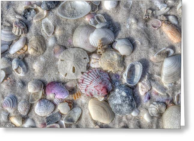 Greeting Card featuring the photograph Shells, Siesta Key, Florida by Paul Schultz
