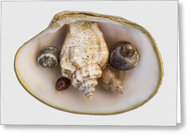 Shells Within A Sea Shell Greeting Card