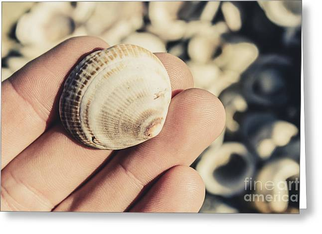 Shelly Point Beach Greeting Card by Jorgo Photography - Wall Art Gallery