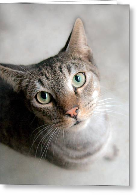 Shelter Cat Greeting Card by Sally Mitchell