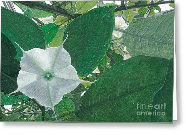 Sheltered From The Sun Datura Greeting Card