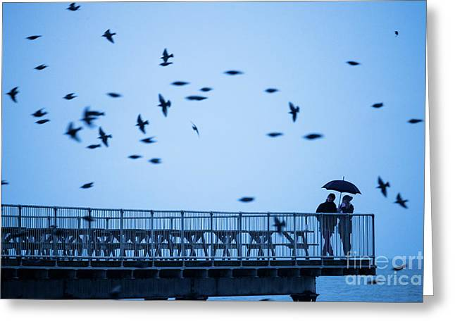 Sheltering Under An Umbrella Watching The Birds Greeting Card
