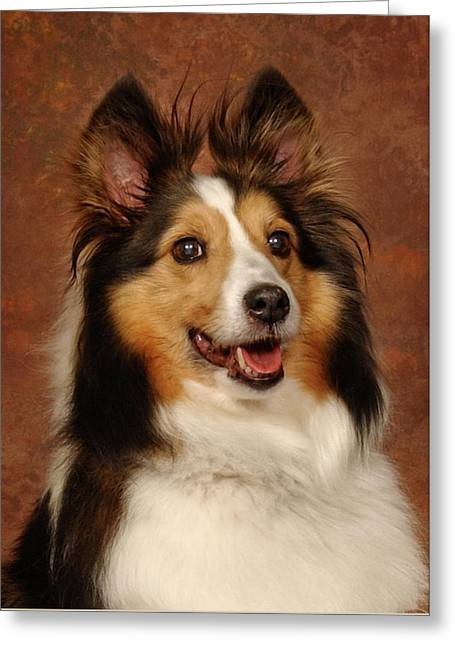 Greeting Card featuring the photograph Sheltie by Greg Mimbs