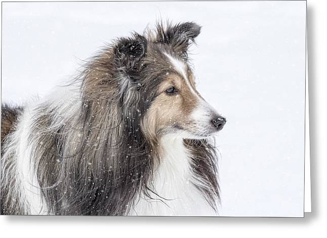 Sheltie Snow Day Greeting Card by Pat Eisenberger