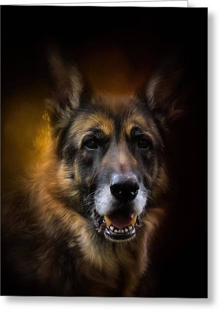 Shepherd Glow Greeting Card by Jai Johnson