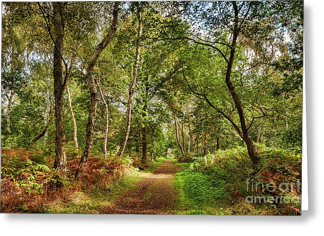 Sherwood Forest, England Greeting Card by Colin and Linda McKie