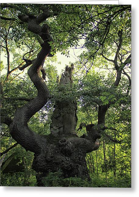 Sherwood Forest Greeting Card by Martin Newman