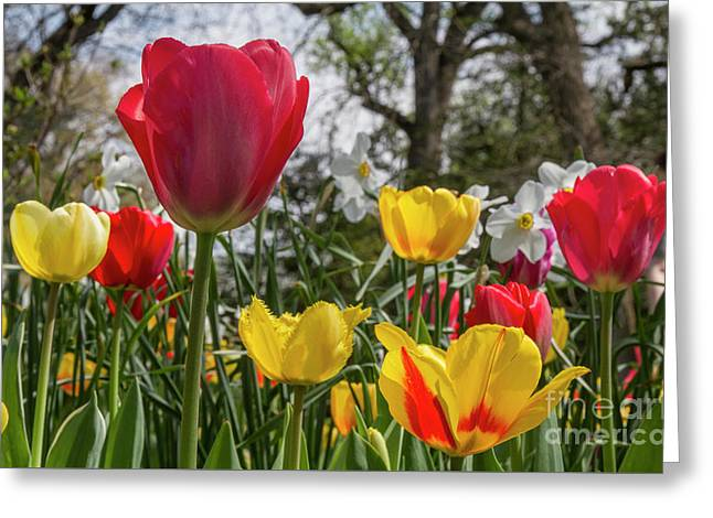 Greeting Card featuring the photograph Sherwood Gardens 17 by Chris Scroggins
