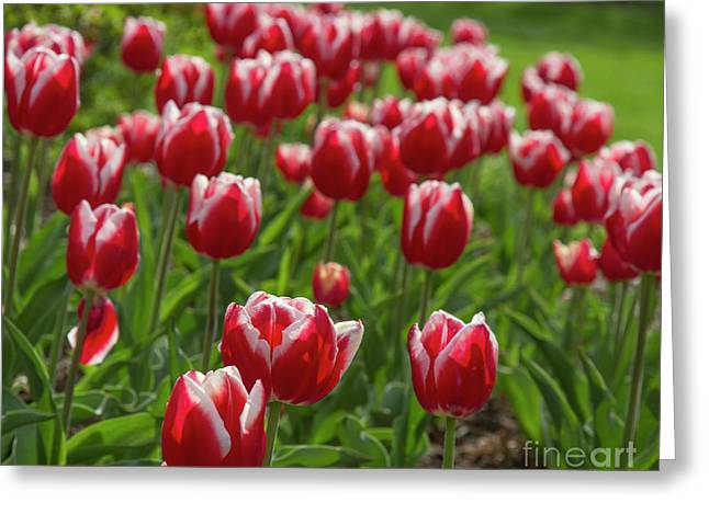 Greeting Card featuring the photograph Sherwood Gardens 19 by Chris Scroggins