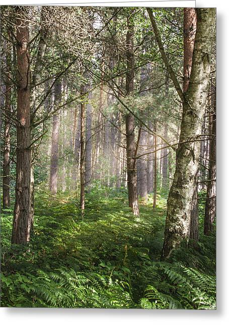 Sherwood Pines Forest Greeting Card