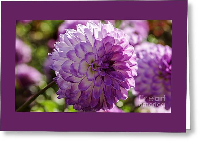 She's A Looker Greeting Card by Nick  Boren