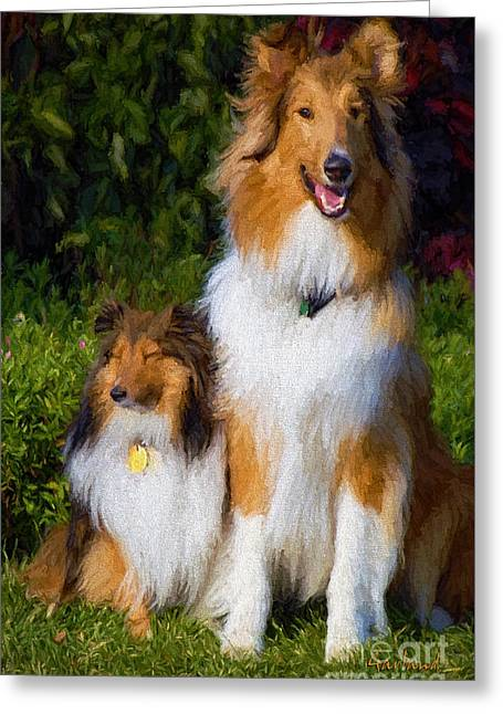 Shetland And Collie Greeting Card