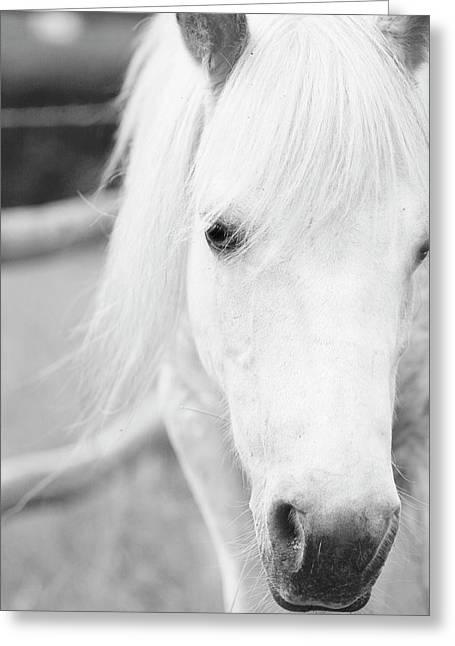 Shetland Pony Greeting Card by Tina Lee