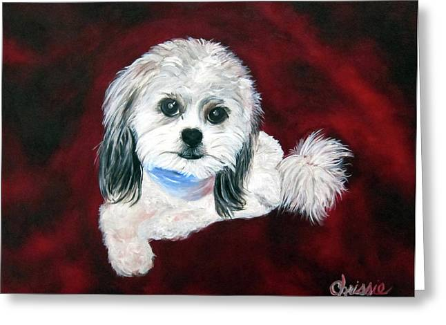 Shih Poo Greeting Card