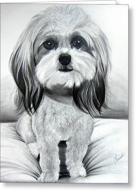 Shih Poo Graphite Greeting Card