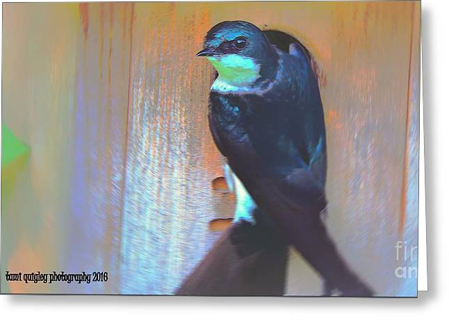 Shimmer Of Blue  Greeting Card by Tami Quigley