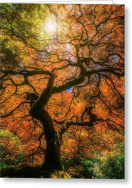 Shine Through Greeting Card by Ryan Manuel