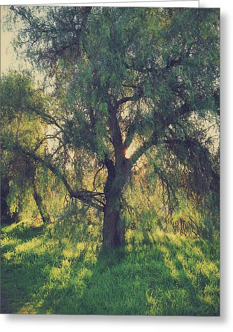 Greeting Card featuring the photograph Shine Your Light by Laurie Search