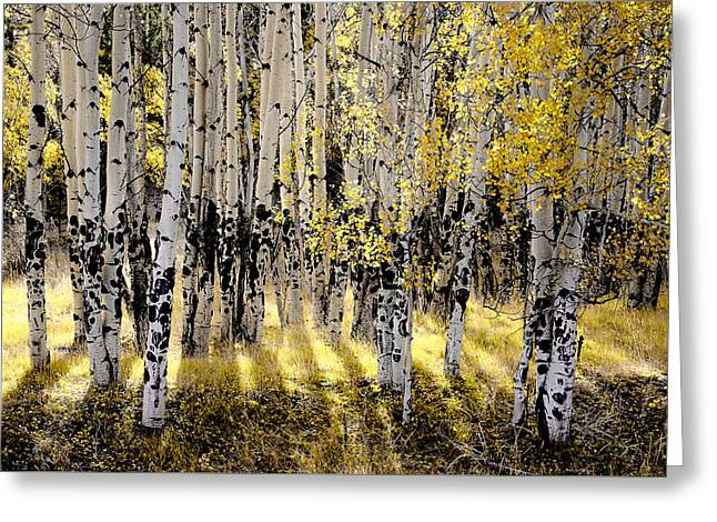 Shining Aspen Forest Greeting Card by The Forests Edge Photography - Diane Sandoval