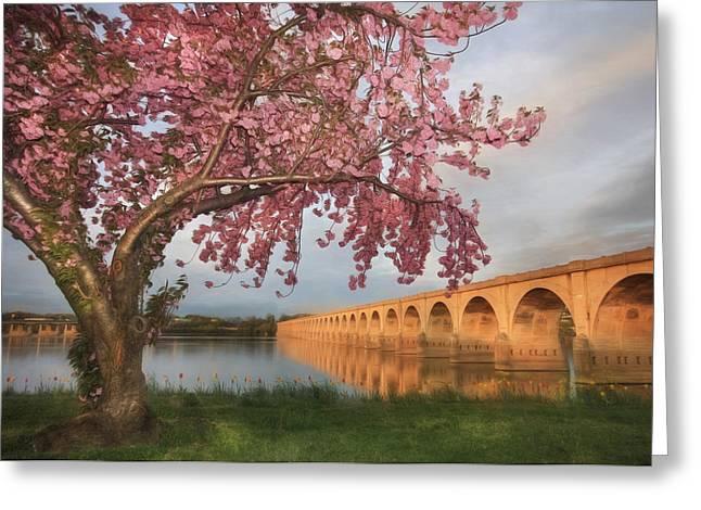 Shipoke In Spring Greeting Card by Lori Deiter