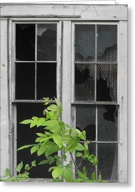 Shirley's Window Greeting Card