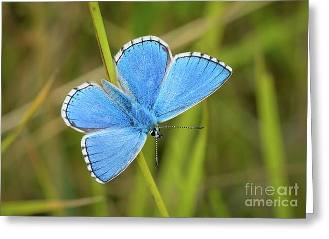 Shocking Blue Butterfly Greeting Card