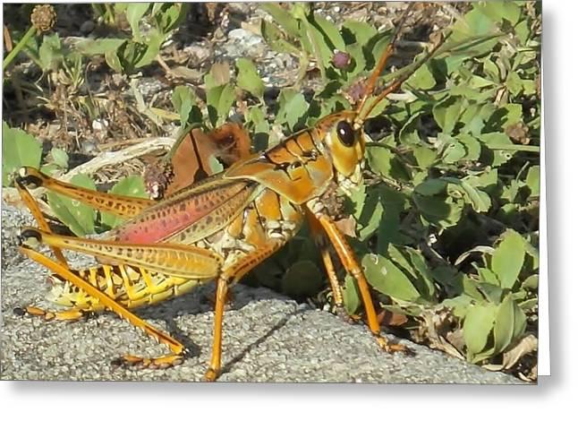 Shocking Grasshopper Greeting Card