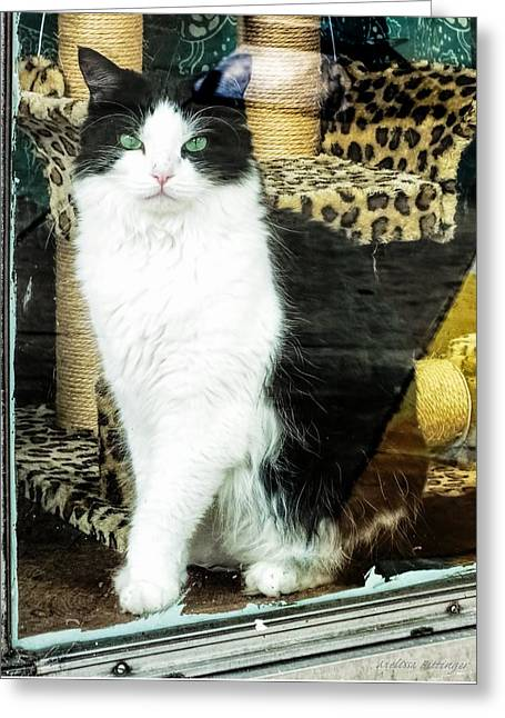 Shop Kitty Cat Downtown Store Window Display Greeting Card