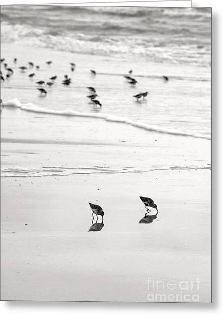 Plundering Plover Series In Black And White 7 Greeting Card by Angela Rath