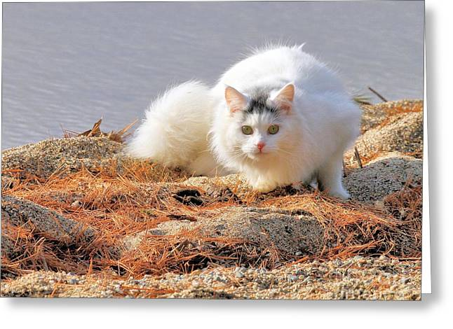 Shore Kitty Greeting Card