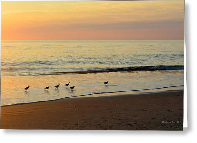 Greeting Card featuring the photograph Shorebirds 9/4/17 by Barbara Ann Bell