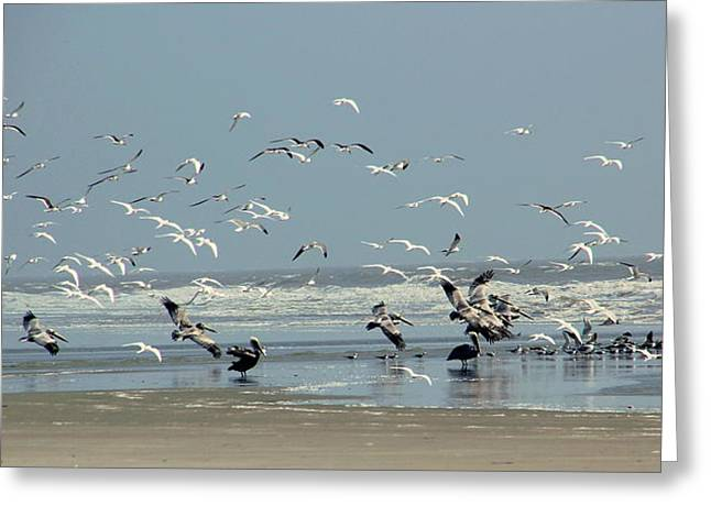 Shorebirds On The Beach Greeting Card