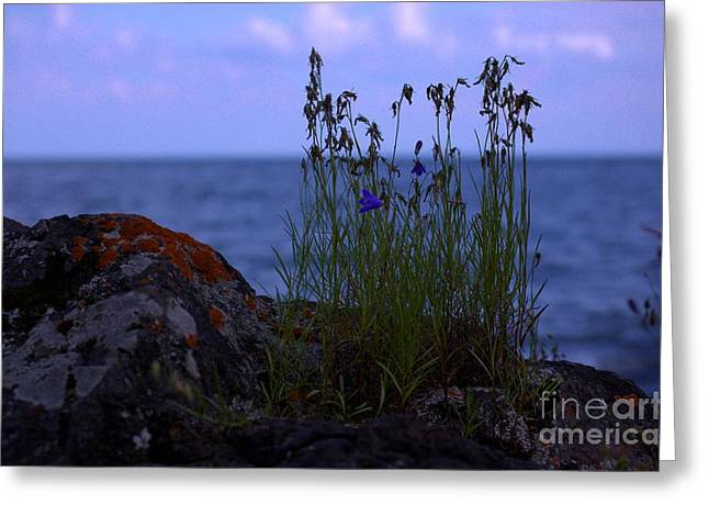 Shoreline Beauties Greeting Card by The Stone Age