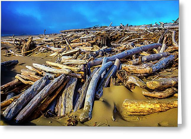 Shoreline Driftwood Greeting Card by Garry Gay